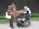 Tiergestützte Therapie mit Lamas/Alpakas_3