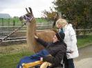 Tiergestützte Therapie mit Lamas/Alpakas_4