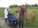 Tiergestützte Therapie mit Lamas/Alpakas