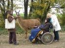 Tiergestützte Therapie mit Lamas/Alpakas_6