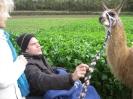 Tiergestützte Therapie mit Lamas/Alpakas_7