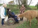 Tiergestützte Therapie mit Lamas/Alpakas_8