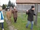 Tiergestützte Therapie mit Lamas/Alpakas_9